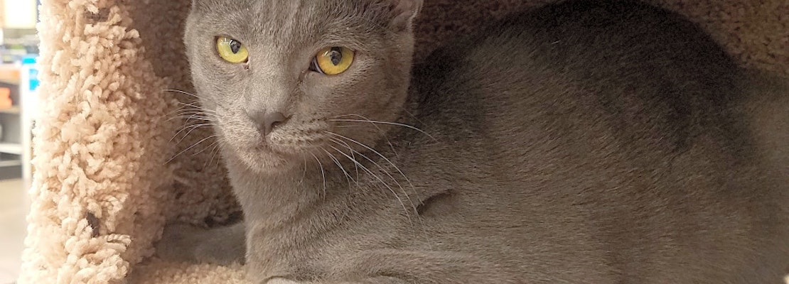 Want to adopt a pet? Here are 6 cuddly kittens to adopt now in Tucson