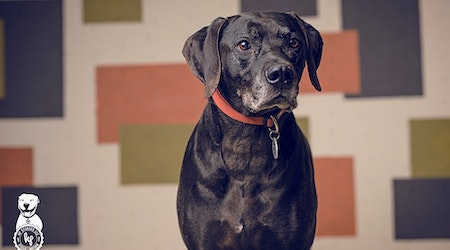 These Portland-based canines are up for adoption and in need of a good home