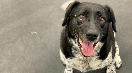 These Indianapolis-based canines are up for adoption and in need of a good home
