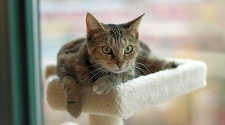 Looking to adopt a pet? Here are 6 cute kitties to adopt now in Washington