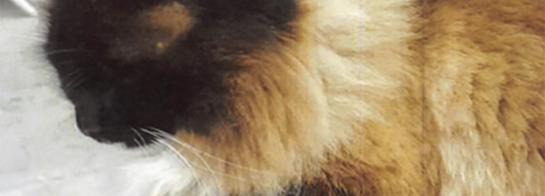 Divisadero woman offers cash reward to find unhoused neighbor's missing cat