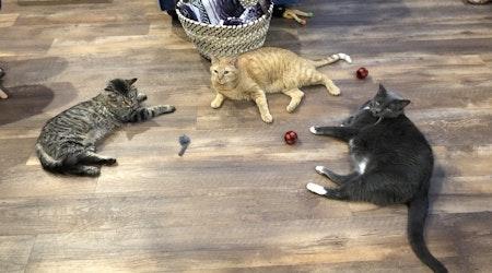 New pet adoption spot El Jefe Cat Lounge now open in Hedrick Acres