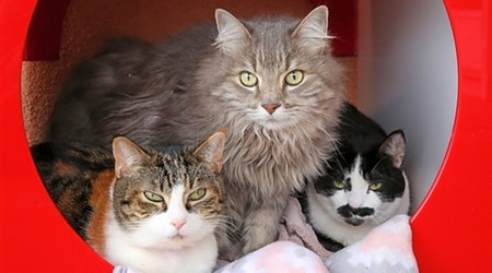 6 furry felines to adopt now in Albuquerque