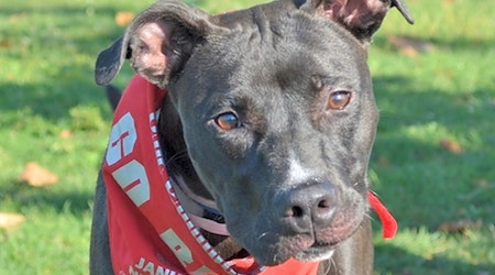 Looking to adopt a pet? Here are 7 delightful doggies to adopt now in Columbus