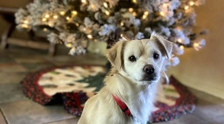Looking to adopt a pet? Here are 6 lovable pups to adopt now in Tucson
