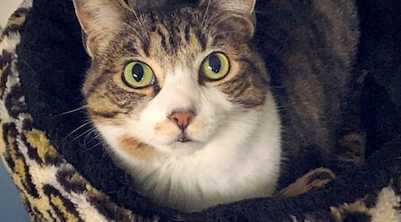 Want to adopt a pet? Here are 7 charming cats to adopt now in Portland