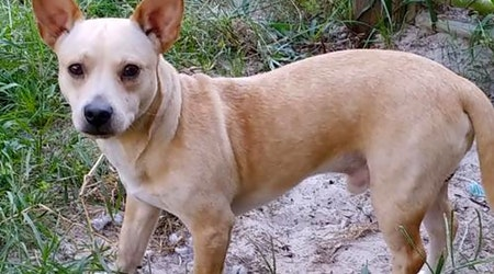 Want to adopt a pet? Here are 4 lovable pups to adopt now in Orlando