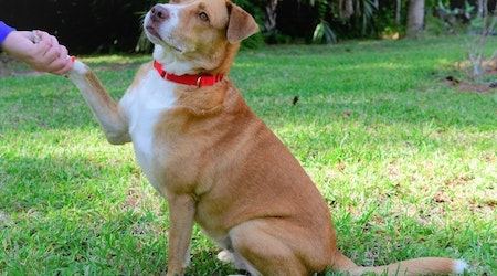 4 delightful doggies to adopt now in Tampa