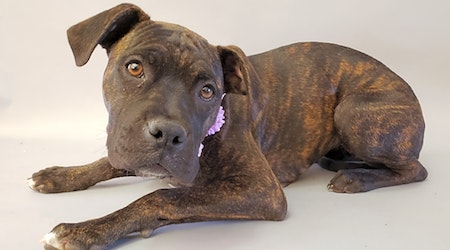 Looking to adopt a pet? Here are 3 perfect puppies to adopt now in Bakersfield
