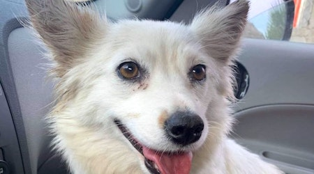 5 adorable pups to adopt in San Diego