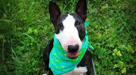 These Louisville-based canines are up for adoption and in need of a good home