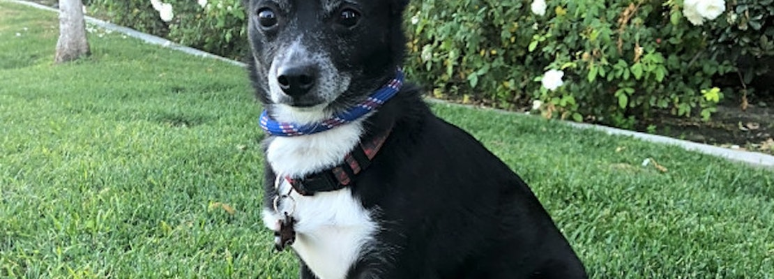 Want to adopt a pet? Here are 4 cuddly canines to adopt now in Bakersfield
