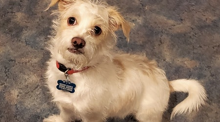 4 cuddly canines to adopt now in Colorado Springs