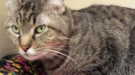 Want to adopt a pet? Here are 7 cool kitties to adopt now in Albuquerque