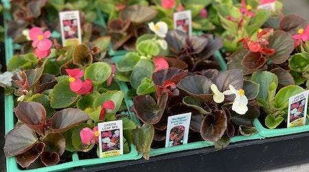 Fresno's 3 favorite plant nurseries (that won't break the bank)