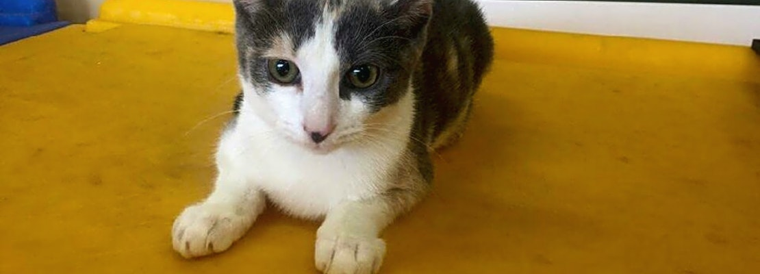 Want to adopt a pet? Here are 7 cute-as-can-be kittens to adopt now in Louisville