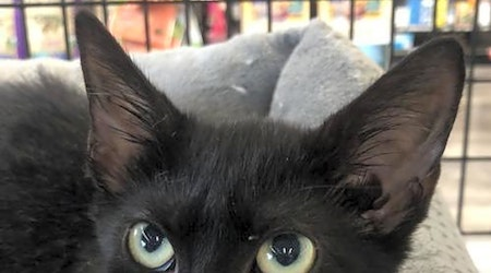 Looking to adopt a pet? Here are 5 cuddly kittens to adopt now in Orlando