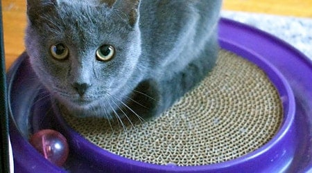 These Chicago-based felines are up for adoption and in need of a good home