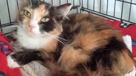 4 furry felines to adopt now in Portland