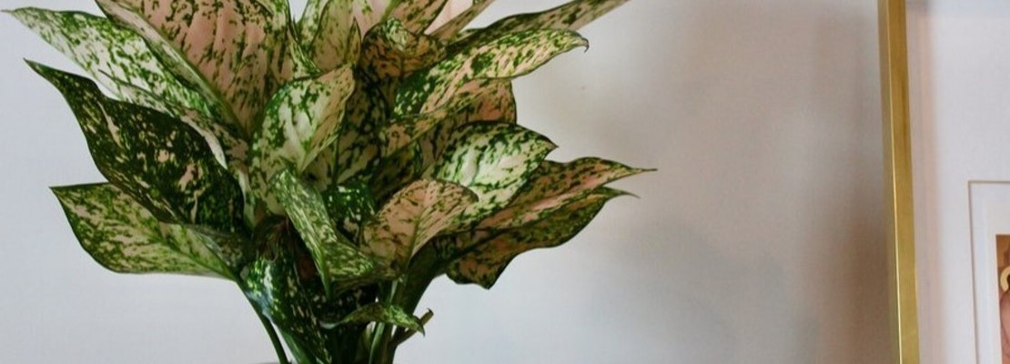 The 3 best plant nurseries in Cambridge