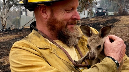 Art prints, lattes & pole dancing: How San Franciscans can help wildfire victims in Australia