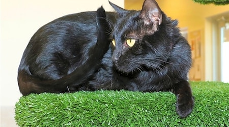 Want to adopt a pet? Here are 5 lovable kitties to adopt now in Albuquerque
