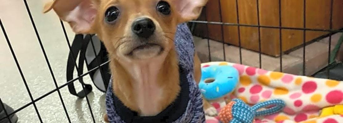 3 precious pups to adopt in Columbus