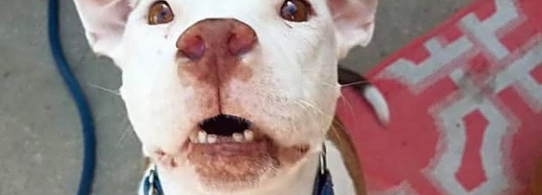 6 delightful doggies to adopt now in Colorado Springs
