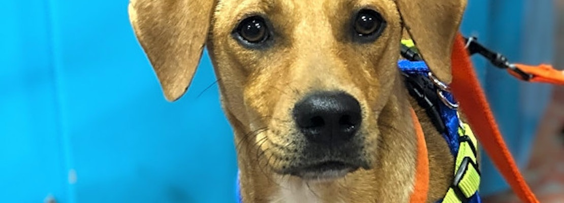 Looking to adopt a pet? Here are 5 adorable pups to adopt now in New Orleans