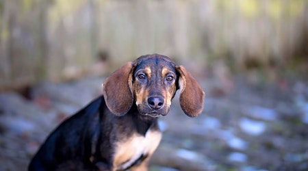 Looking to adopt a pet? Here are 4 perfect puppies to adopt now in Cincinnati