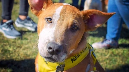 7 cuddly canines to adopt now in New Orleans