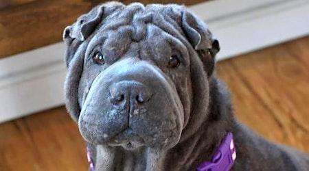 6 delightful doggies to adopt now in Milwaukee