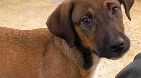 Looking to adopt a pet? Here are 3 perfect pups to adopt now in Washington