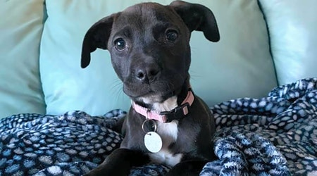These Saint Paul-based puppies are up for adoption and in need of a good home