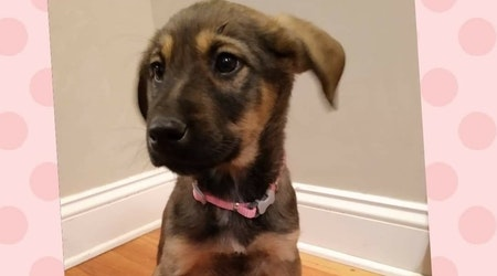 Want to adopt a pet? Here are 6 perfect puppies to adopt now in Kansas City