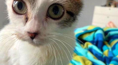 7 lovable kitties to adopt now in Austin