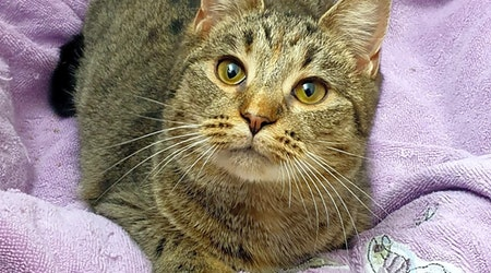 Want to adopt a pet? Here are 5 lovable kitties to adopt now in Pittsburgh