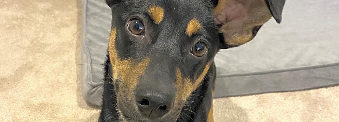 7 precious puppies to adopt now in Cincinnati