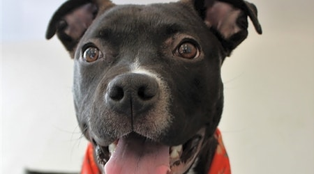 Want to adopt a pet? Here are 5 lovable pups to adopt now in Detroit