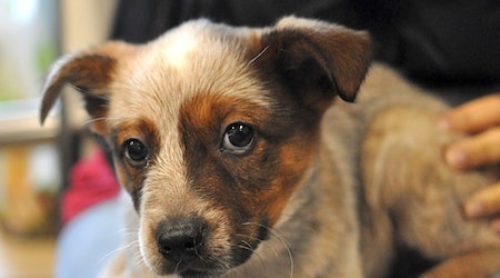 4 perfect pups to adopt now in Atlanta