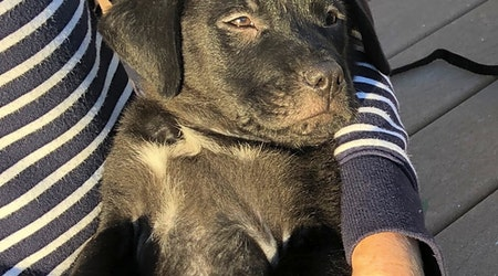 These Orlando-based puppies are up for adoption and in need of a good home