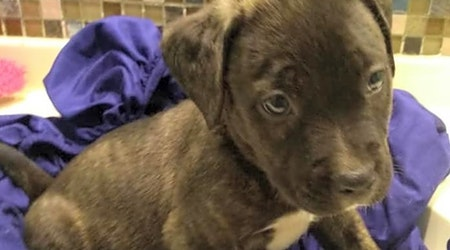 Looking to adopt a pet? Here are 7 precious puppies to adopt now in Tampa