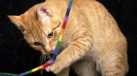 Want to adopt a pet? Here are 5 fluffy felines to adopt now in Chicago