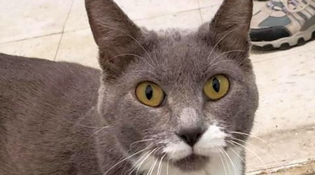 Want to adopt a pet? Here are 5 charming cats to adopt now in Fresno