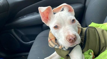 6 perfect pups to adopt now in Cleveland
