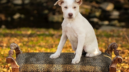 7 perfect puppies to adopt now in Cincinnati