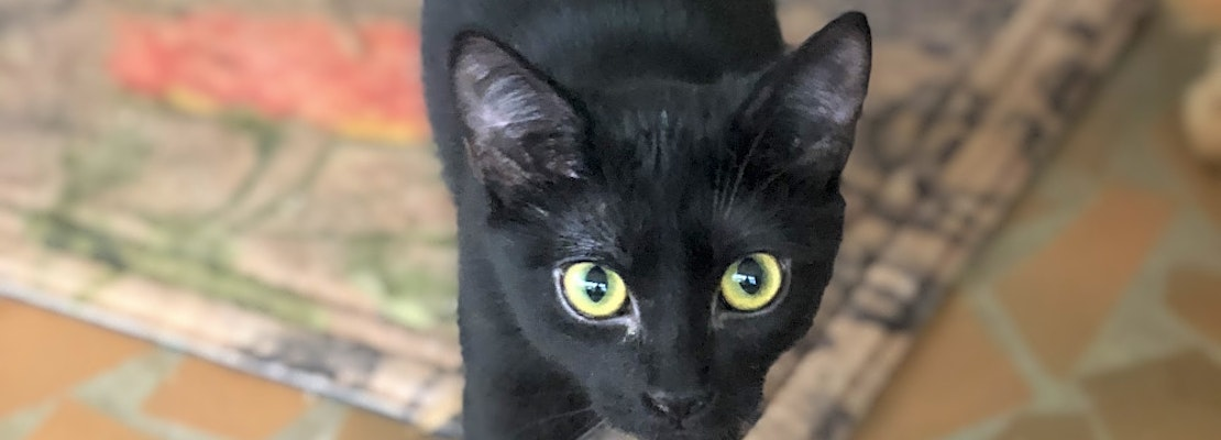 These Atlanta-based kittens are up for adoption and in need of a good home