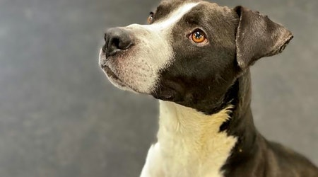 Want to adopt a pet? Here are 5 lovable pups to adopt now in Indianapolis
