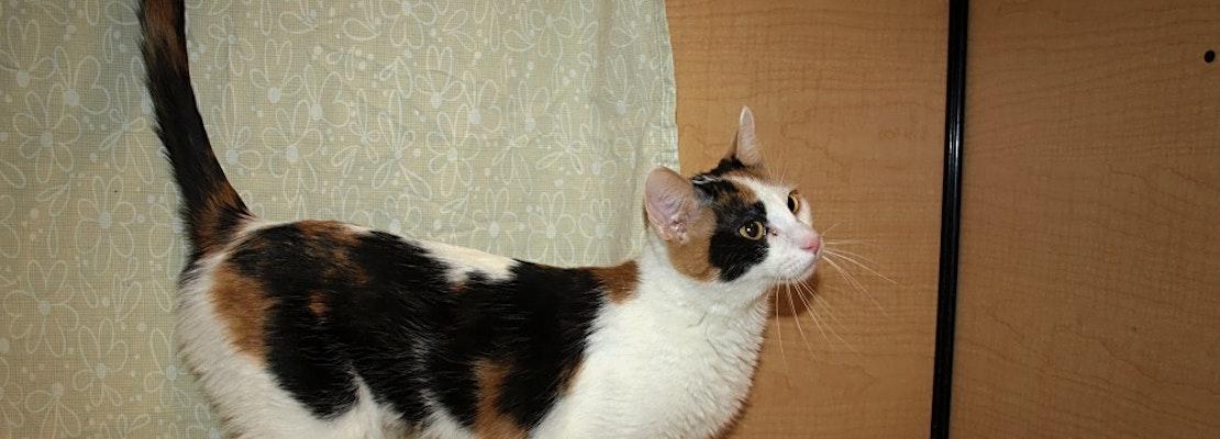 7 cute kitties to adopt now in Kansas City