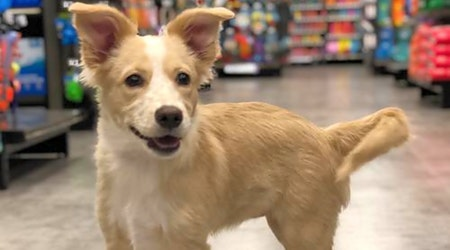 Want to adopt a pet? Here are 7 cuddly canines to adopt now in Austin